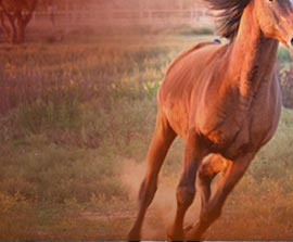 Horse Graphics & Website Design